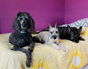 dogs laying on a bed