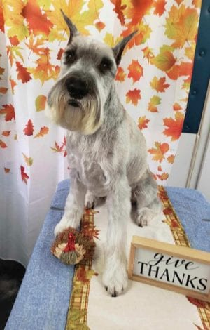 dog sitting on a table with a thanksgiving sign