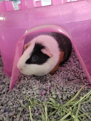 hamster sitting in pink house